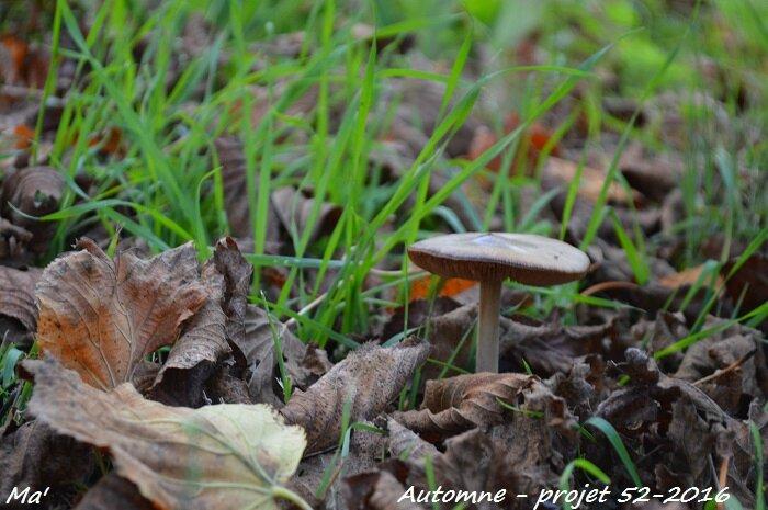 52-2016_S41_automne