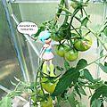 encore des tomates