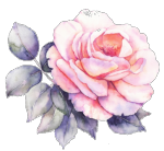 pink_rose_clear