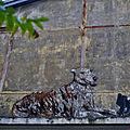 Graff canin