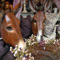 Deux ânes et des roses