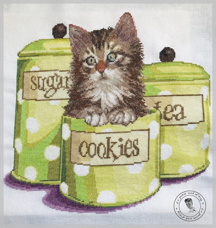 chaton dans sa boite
