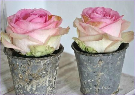Roses et pots en zinc
