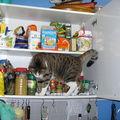 Minou dans le placard à épicerieo