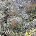 nyiragongo_montée au volcan_fissures des zone des coulées de 2002_008