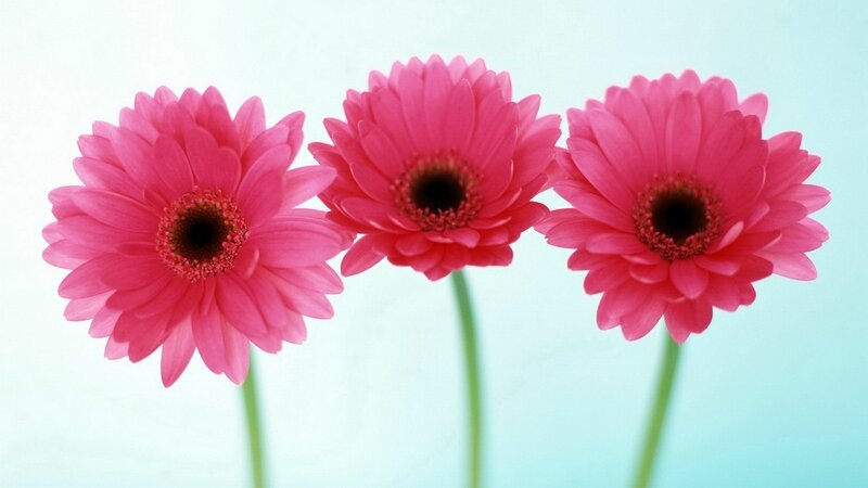 Images-of-flowers-19