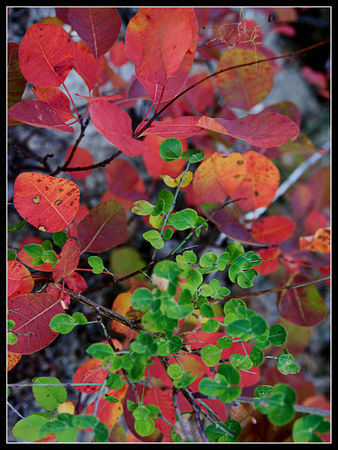 red_and_green_dream