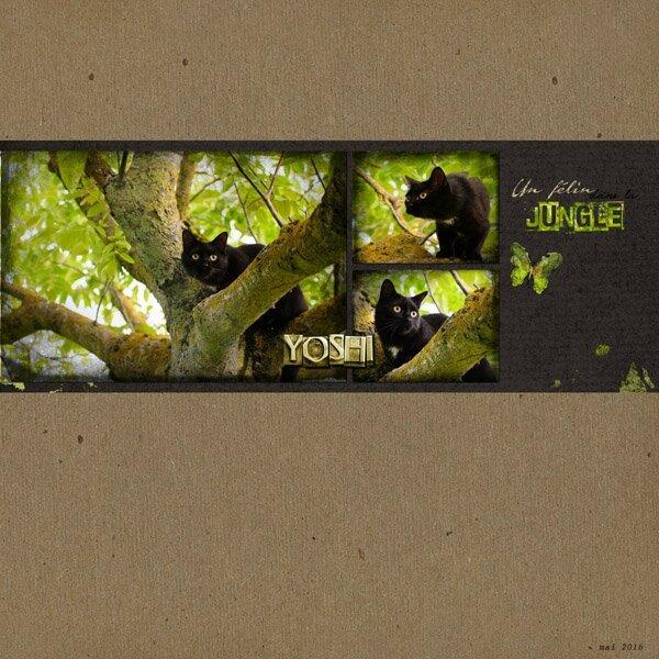 16-05 dans la jungle