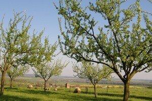 village_et_moutons