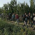 Référendum antimigrants en hongrie : victoire du