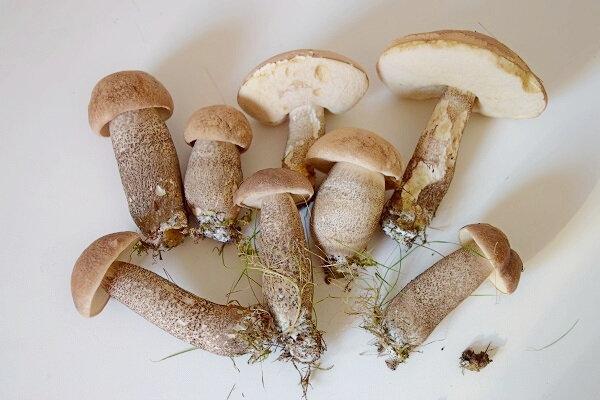 mini bouchée de duxelle de champi (1)