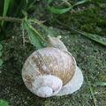 2008 06 10 Un escargot