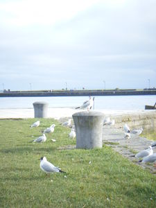 Galway_062