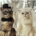 Mariage_chat