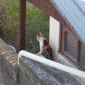 Revoilà ... le ptit chat !
