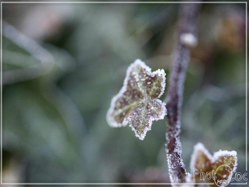 phototoc hiver