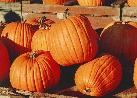800px_Pumpkins