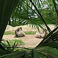 Le zoo d'amnéville-les-thermes en lorraine