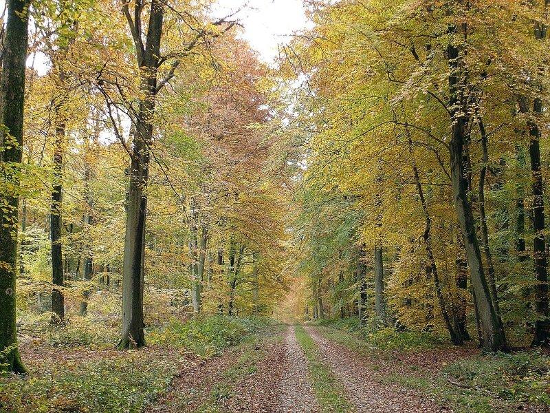 1024px-29_-_Haute_Forêt_d'Eu,_route_de_Soreng