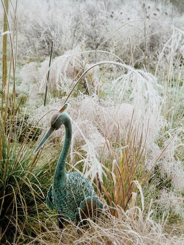 heron dans les graminees gelees (1)