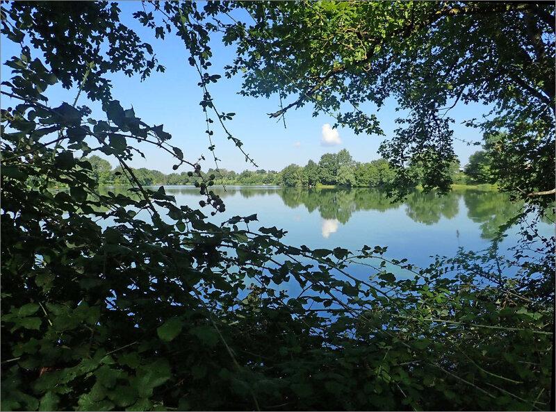 Gâtine étang Chevrières 250718 ym 1