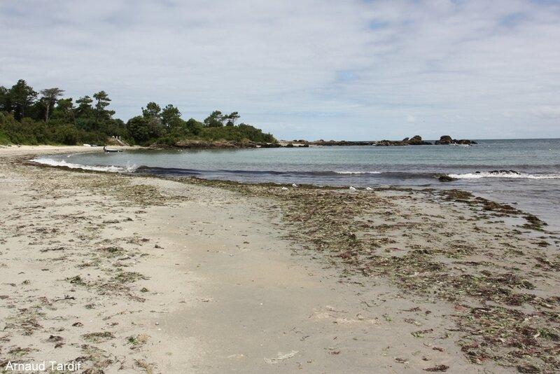00546 Noirmoutier Juin 2020 - L'Ile d'Yeu de Port Joinville à la Plage des Vieilles - La Plage des Sapins