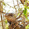 Le sourire d'un iguane