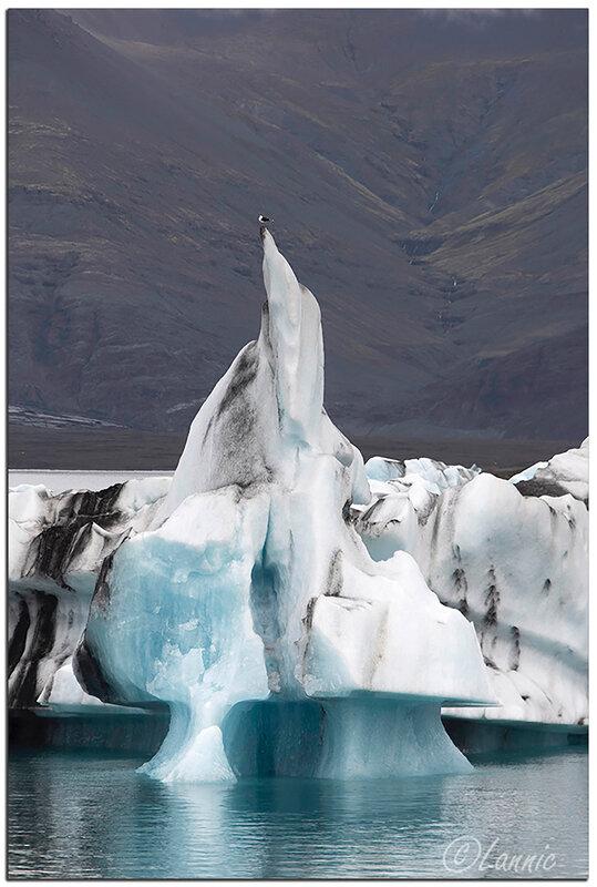 Islande (61) Jökulsárlón