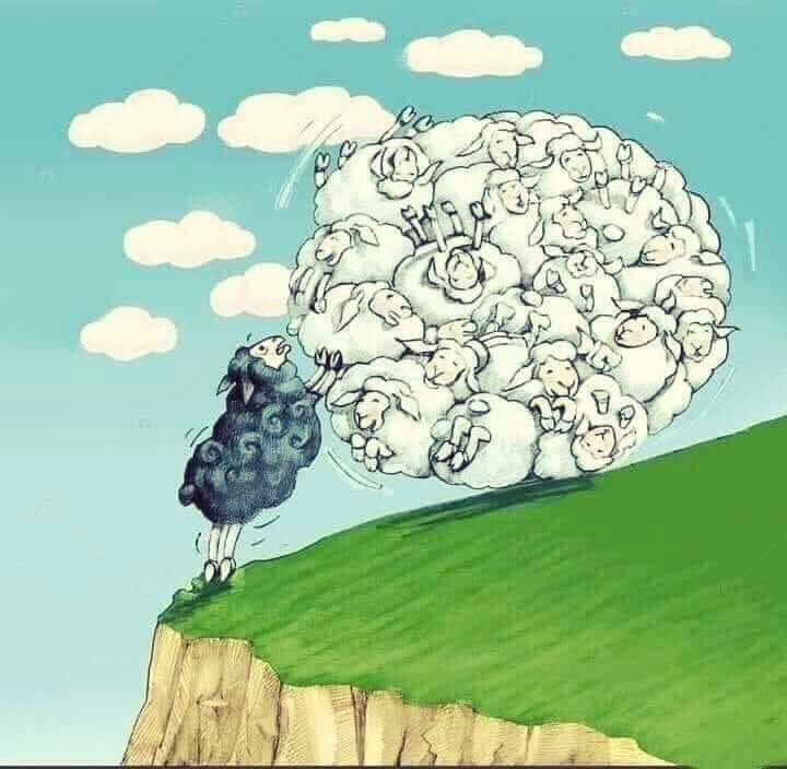 mouton-sauveur