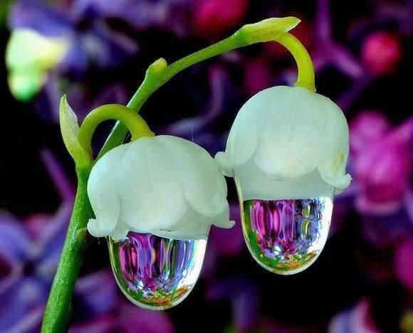 fleur-rare-24