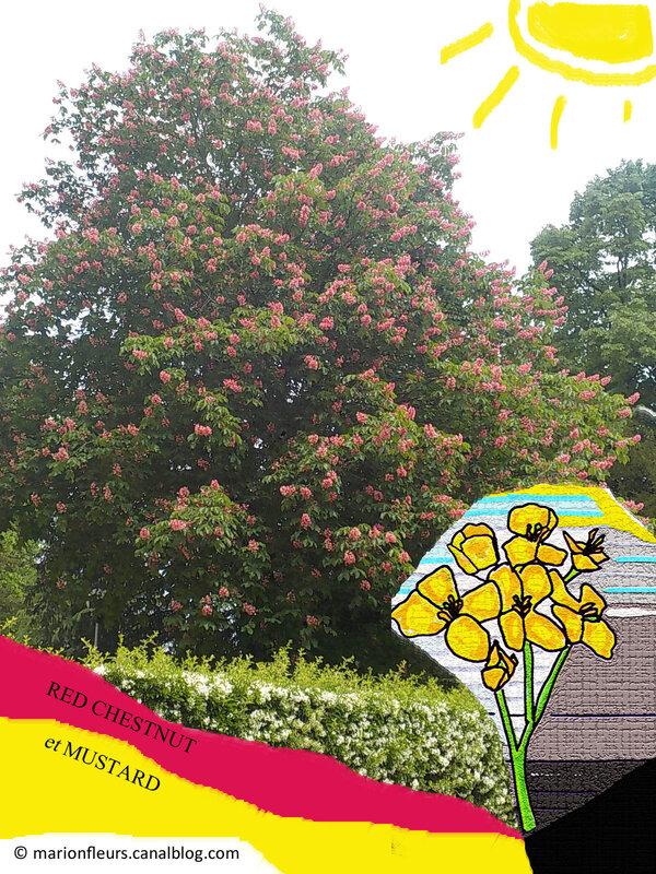 red_chestnut_mustard_fleurs_de_bach_marionfleurs