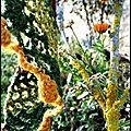 Châle couleur de mousse