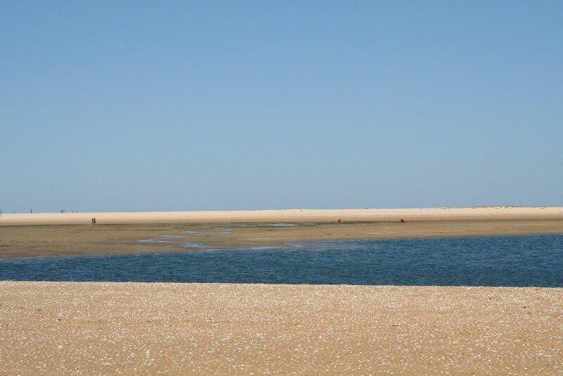 La mer a laissé tous ces coquillages blancs sur le sable