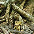 Les aventures de danbo au cambodge #4