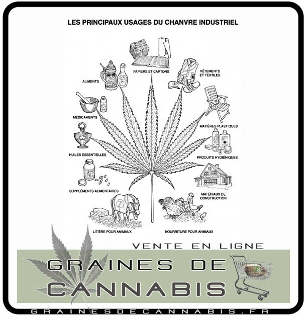 applications de datation de marijuana