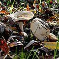 champignon-05927 (4)