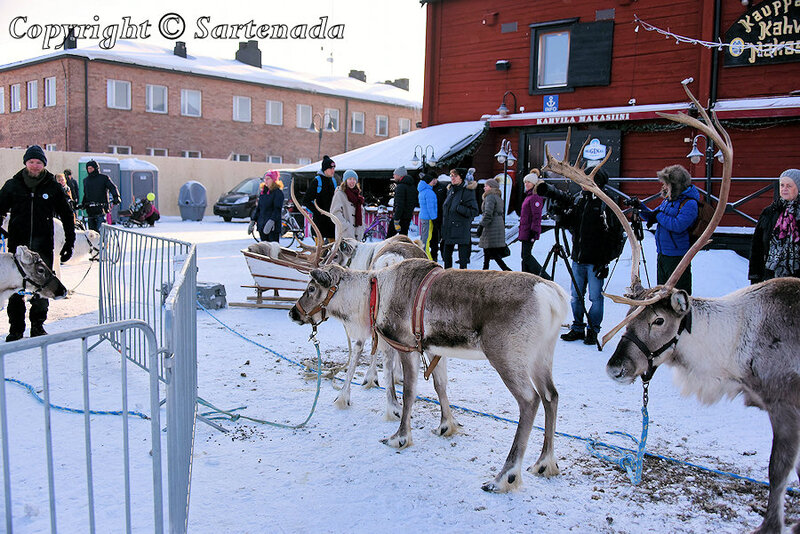 reindeer_rides_for_families_oulu_-37