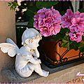 geranium balconniere 7