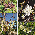 Fleurs du jardin (18)