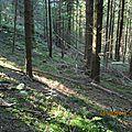Le geai signale ma présence en forêt...il ne fait pas chaud..mes yeux scrutent le sous-bois et.. !!
