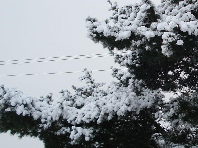 neige_1er_dec_2010_008