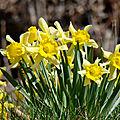 Ambiance énergétique printemps - niveau vibratoire - mes constats