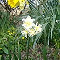 narcissus poetez 'cheerfulness'