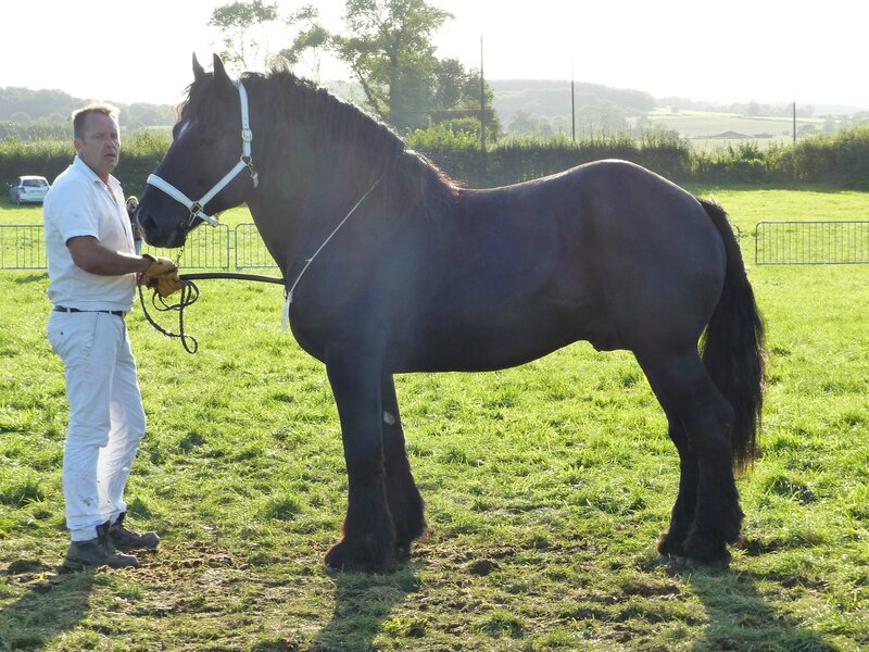 cheval de trait vente