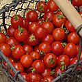 Il était une fois, les tomates ... épisode 1