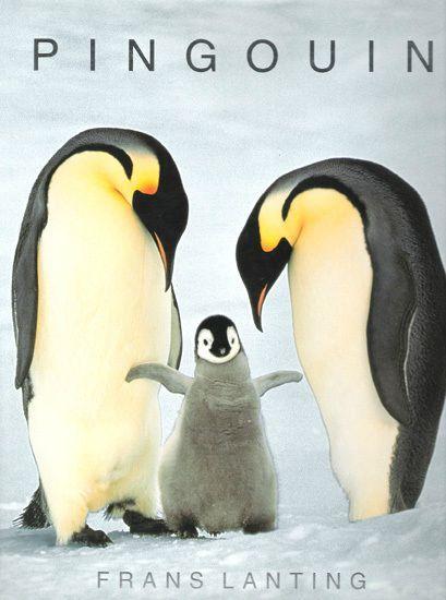 la reproduction des pingouins sur la banquise la. Black Bedroom Furniture Sets. Home Design Ideas