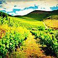 Délicieux douro: une vallée, un fleuve, un train et du vin...