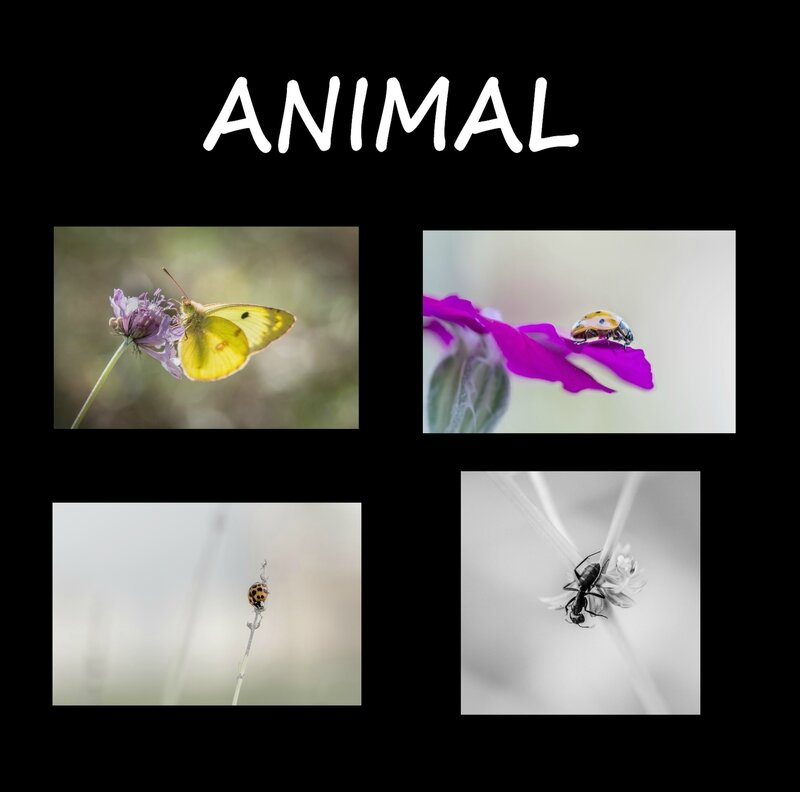 tableau 2 - l'animal