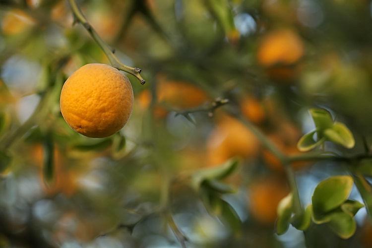 Orange_10_21_10_2026