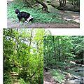 Ruisseau du ratier (craponne)